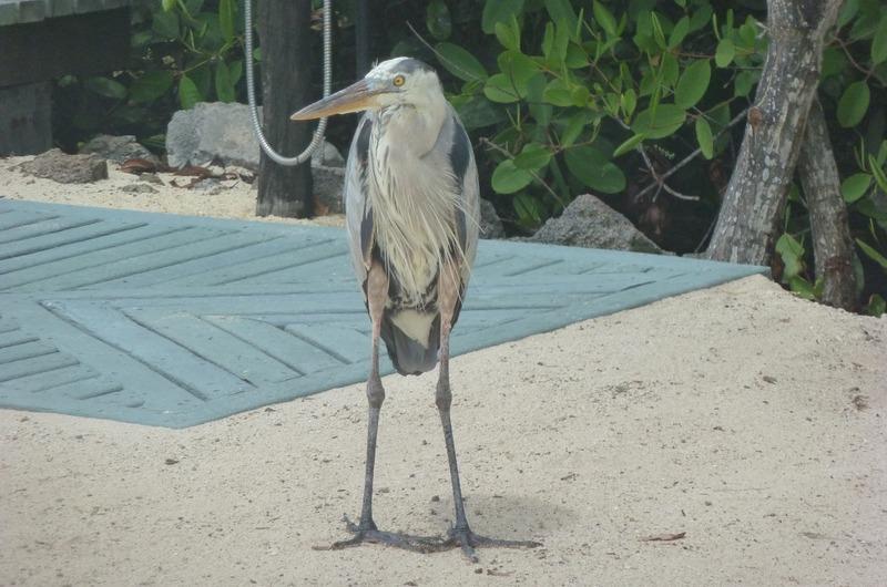 Heron at Finch Bay Hotel