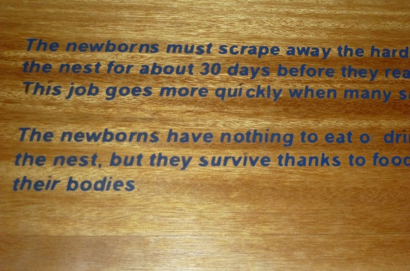 This slide explains how the newborns feed