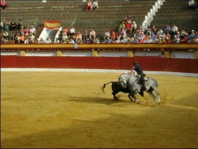 Bull_fight.jpg