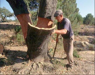 Cork_Tree_harvest.jpg