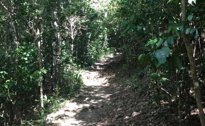 Jungle_Trail_Modified.png