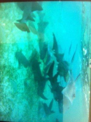 Shark and Sting Ray