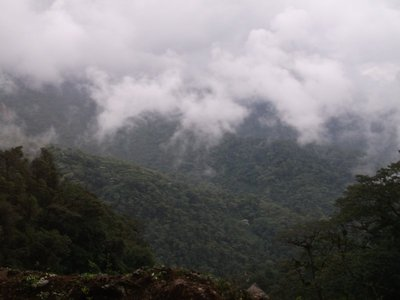 Driving through the Cloud Forest