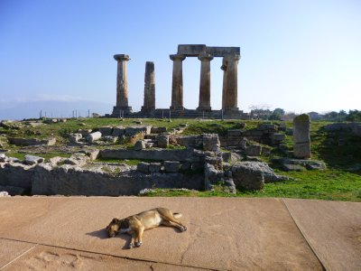 Corinth - Temple of Apollo with dog
