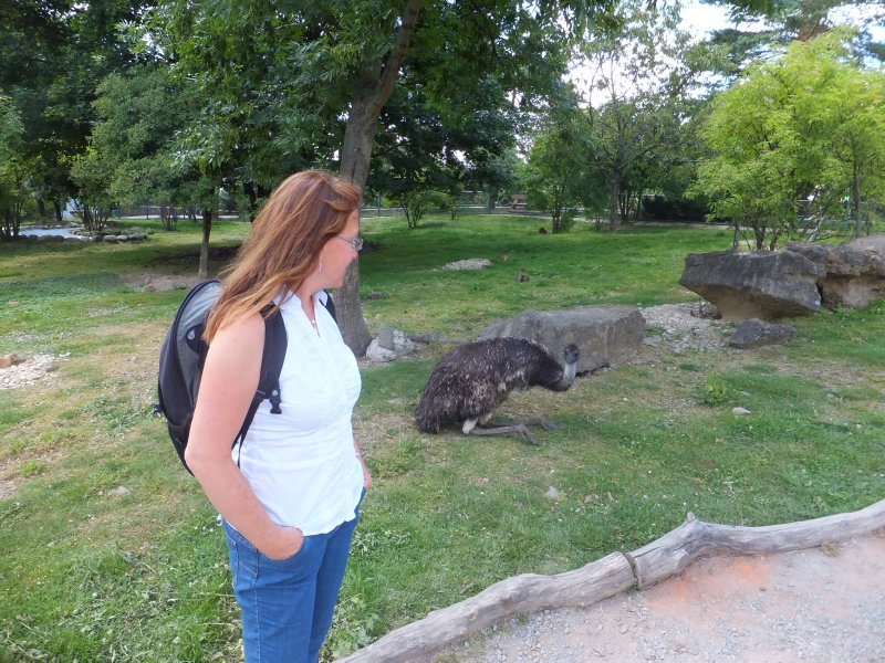 Walking among the Emus
