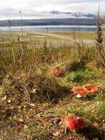 Atumn day at Lake Tekapo