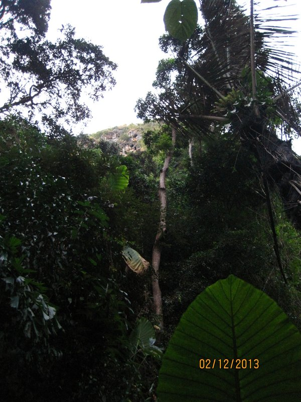 large_Upward_view_of_jungle.jpg