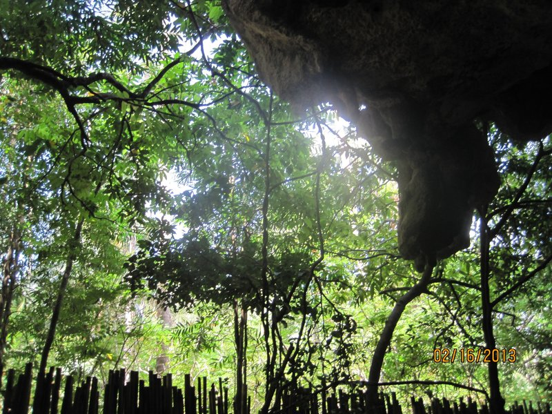 large_View_of_jungle_and_cave.jpg