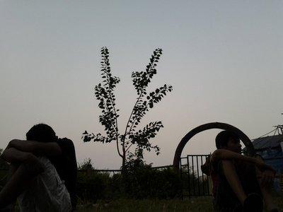 Dark Plant..=)
