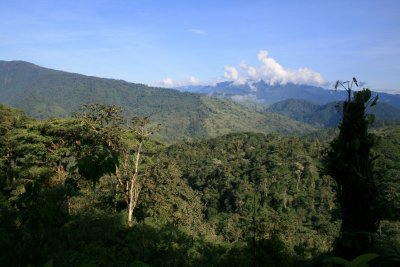 Cloud forests