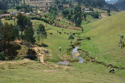 Rwanda, boven 2000m
