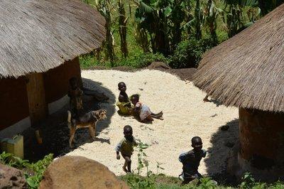 Uganda--Kinderen in de koffiebonen