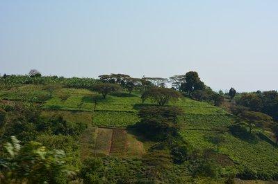 _17_Tanzania-thee.jpg