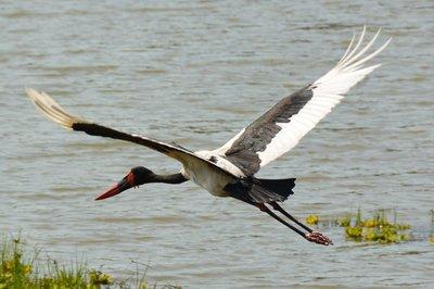 _6_South_L..illed_stork.jpg