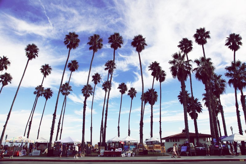 Soaring palm trees of Santa Barbara