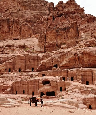 Petra Horses