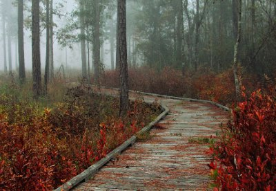 Foggy Autumn Boardwalk