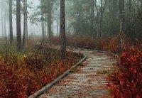 Foggy Autumn Boardwalk