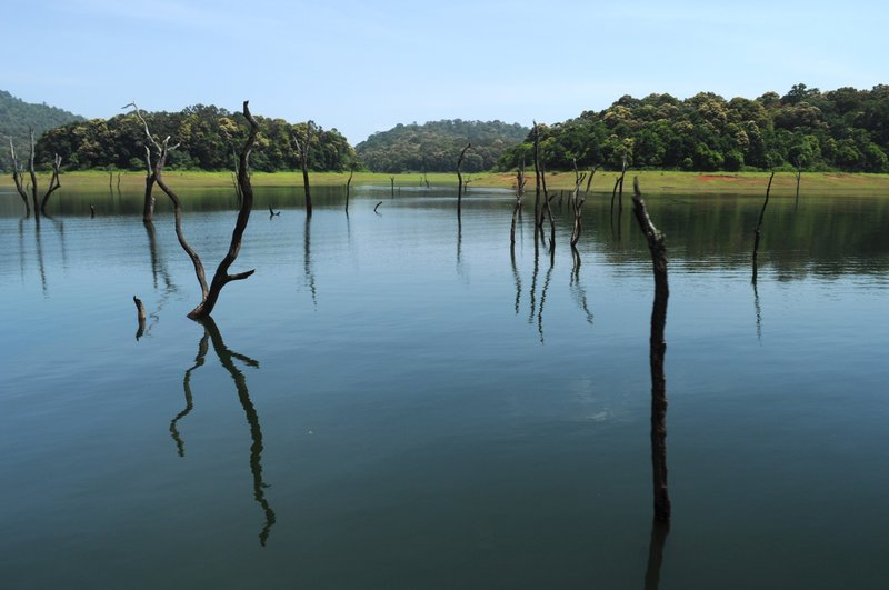 Submerged trees in Periyar Lake