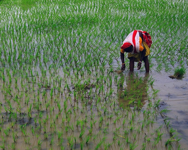Water Crop