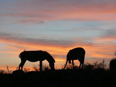 2 zebrasunset