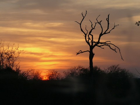 Another Bushveld sunset