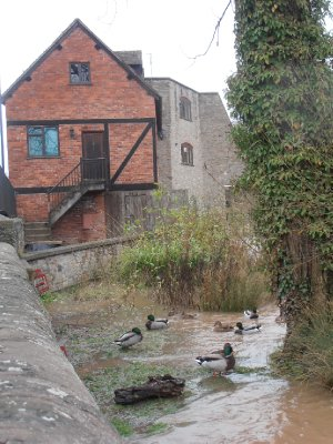 Luckily the Ducks Managed to Find a Calmer Part of The River!