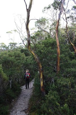 Aine on her leisurely stroll around cradle mountain