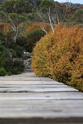 Wooden bridge with Autumn colours in the background