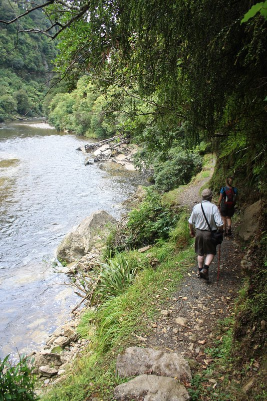 looped walk near Punakaiki