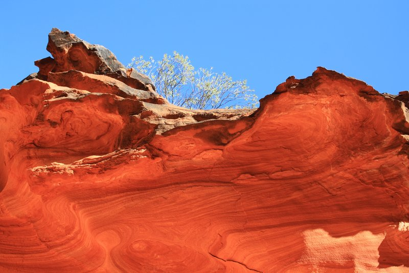 Kings Canyon Cliff Face