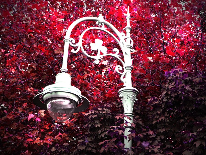 Irish Street Lamp in Autumn