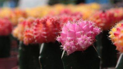 A Sweet Cactus