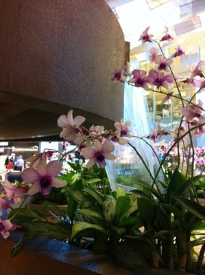 Orchids at Singapore Airport