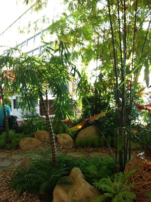 Bamboo garden at Singapore Airport