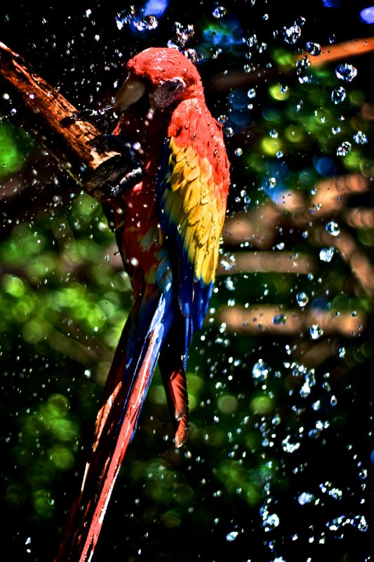 Bird Bath, El Salvador