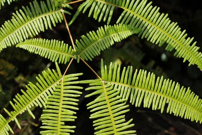 Fern detail (Bukit Patoi = Patoi Hill)