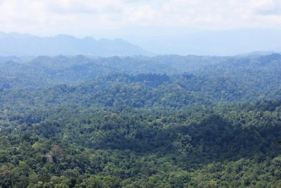 Over the forests of Brunei (Bukit Patoi = Patoi Hill)