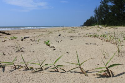Deserted beach in Tutong