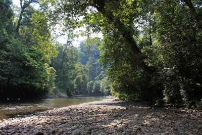 Wild rivers of Brunei (Ulu Temburong National Park)