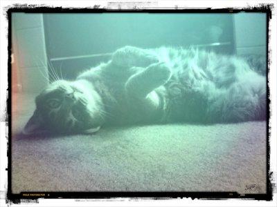 Lazy Cat Days