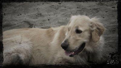 Zane at the beach2