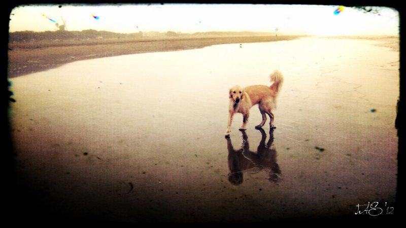 Zane at the beach