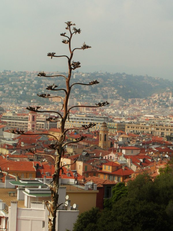 The orange rooftops of Nice, France.