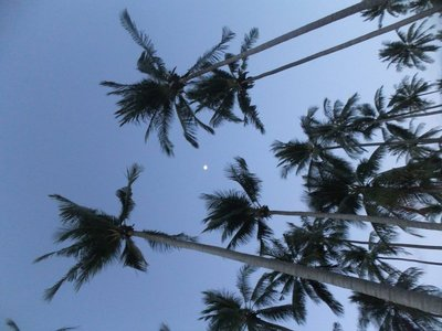 Moon through the palm trees at Koh Lanta