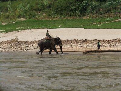 Elephants along the Mekong