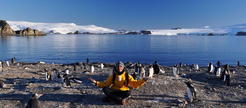 Among the penguins