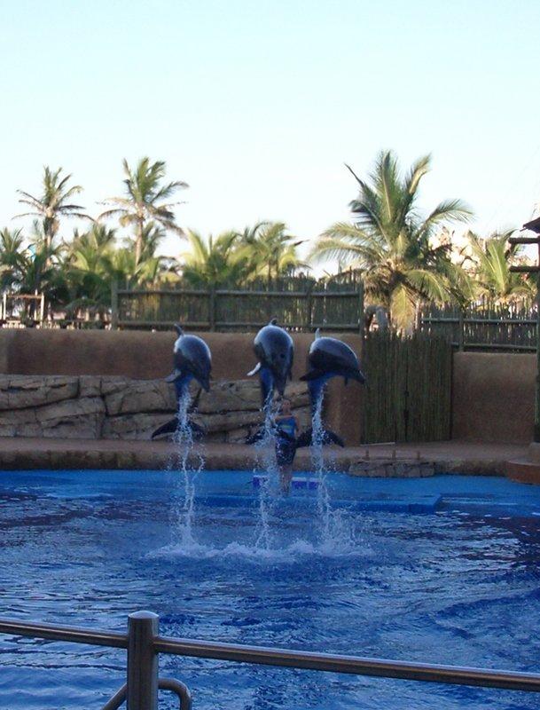 dolphin show @ uShaka Marine World