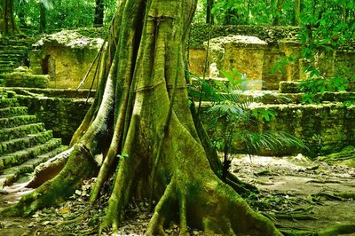 Tree growing in ruins of Palenque