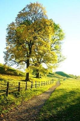 Autumn leaves and burial mounds at Gamla Uppsala
